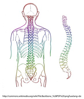 spine-chiropractic-care